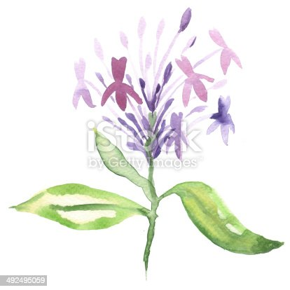 istock Floral watercolor painting 492495059