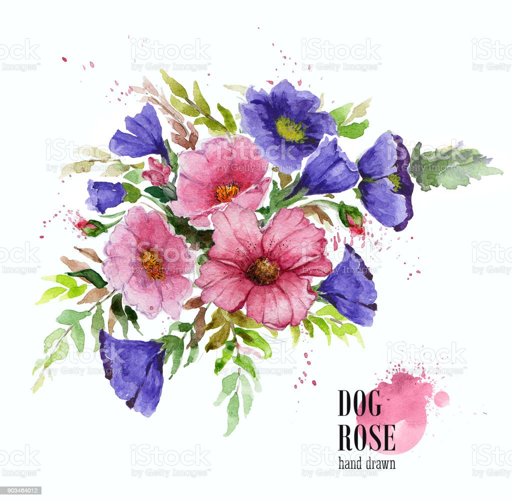 Flower Composition Bouquet Of Garden Flowers Watercolor Illustration ...
