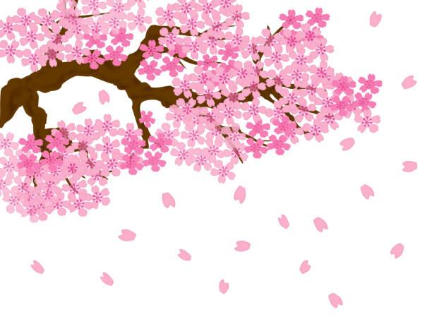 桜吹雪 イラスト素材 Istock