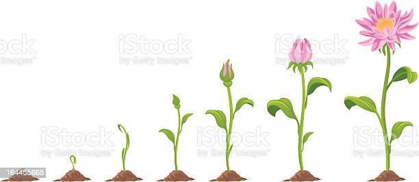 Flower illustration id164455665?b=1&k=6&m=164455665&s=612x612&h=y2kh sygtgccmxhj9bev1hipsqvtri6q4xnyfvya ts=