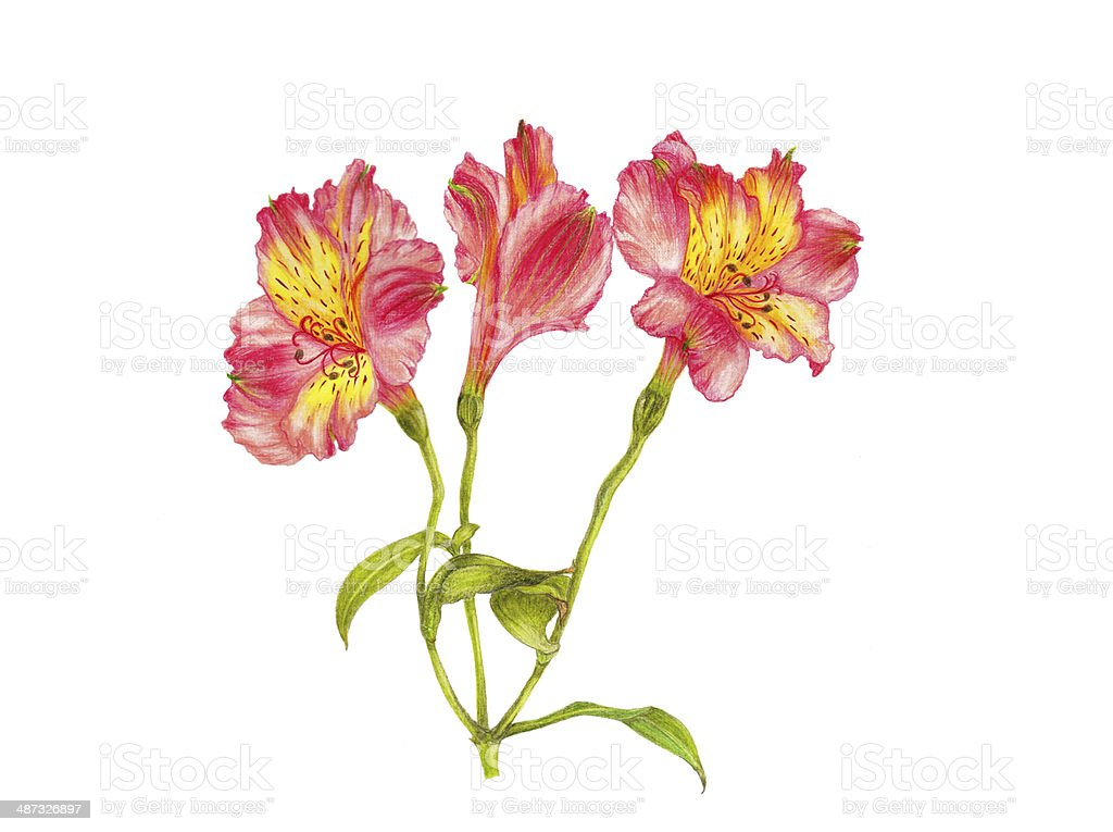 Flor - ilustración de arte vectorial