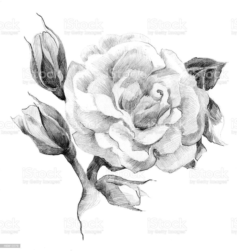 ilustração de desenho de flor rosa e mais banco de imagens de arte