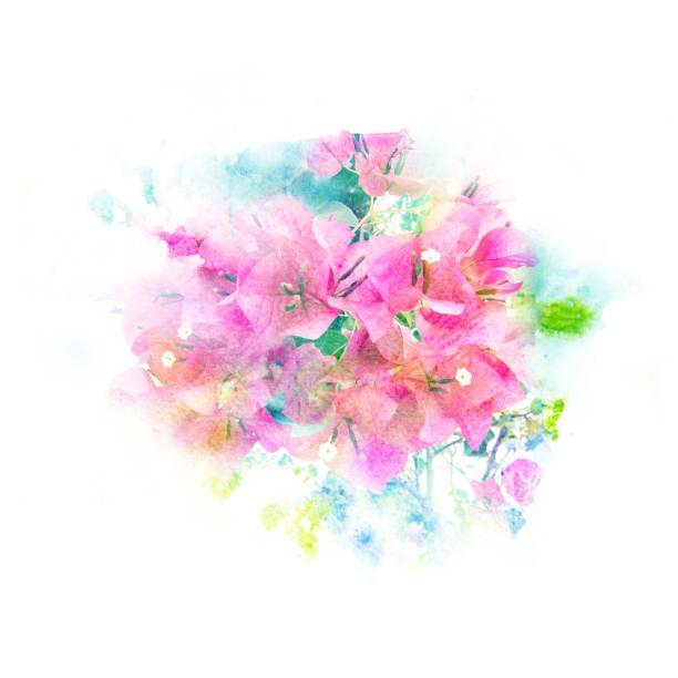 Flores acuarela ilustración. - ilustración de arte vectorial
