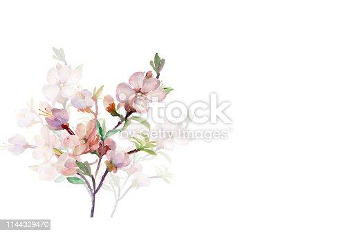 Pattern watercolor apricot branch.