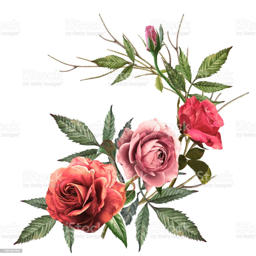 Flowerrose Flowernatureplantartdesignleafillustrationbeautycolors