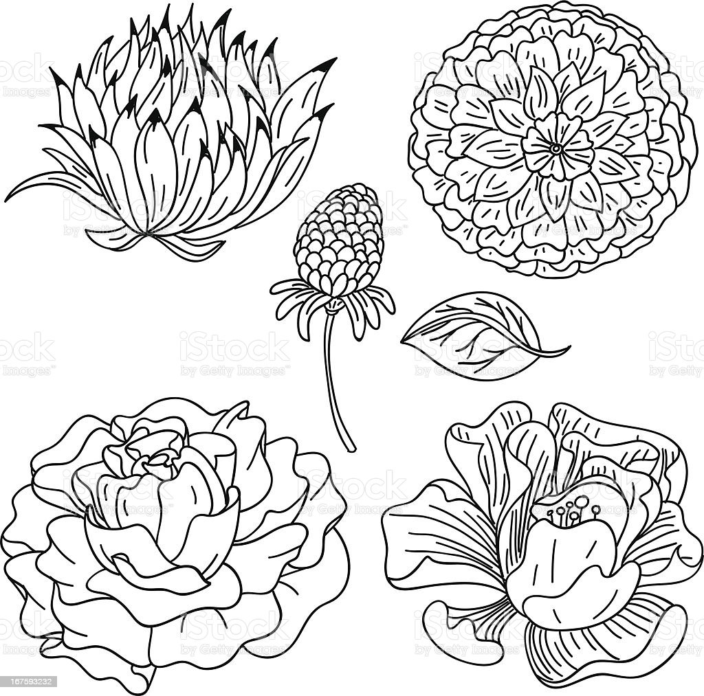 Flowers Collection In Black And White Stock Illustration