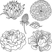 Flowers collection in sketch style
