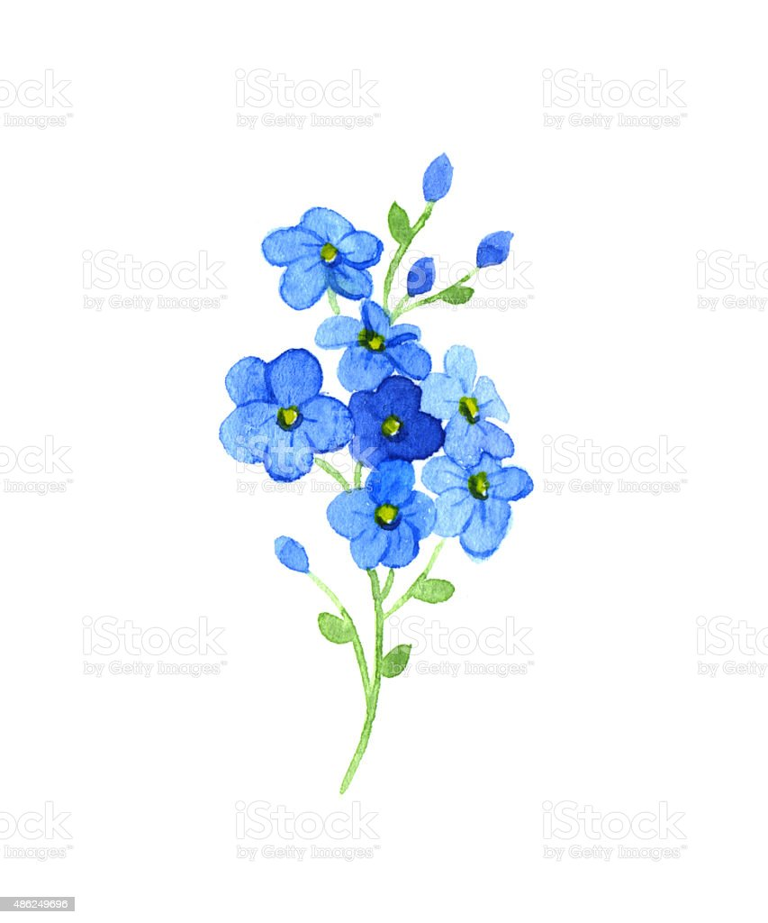 Royalty Free Forget Me Not Flower Clip Art Vector Images