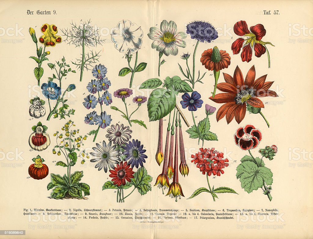 Flowers Of The Garden Victorian Botanical Illustration Royalty Free