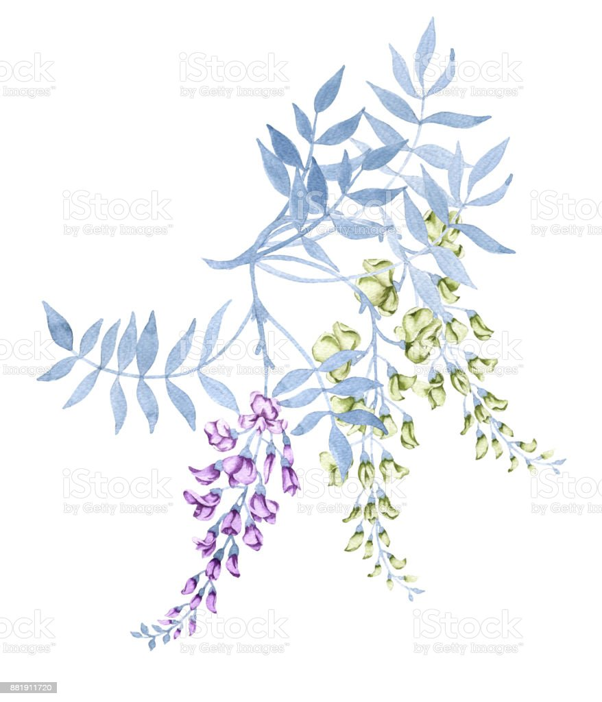 Flowers on a branch of a wisteria. Isolated on white background. vector art illustration