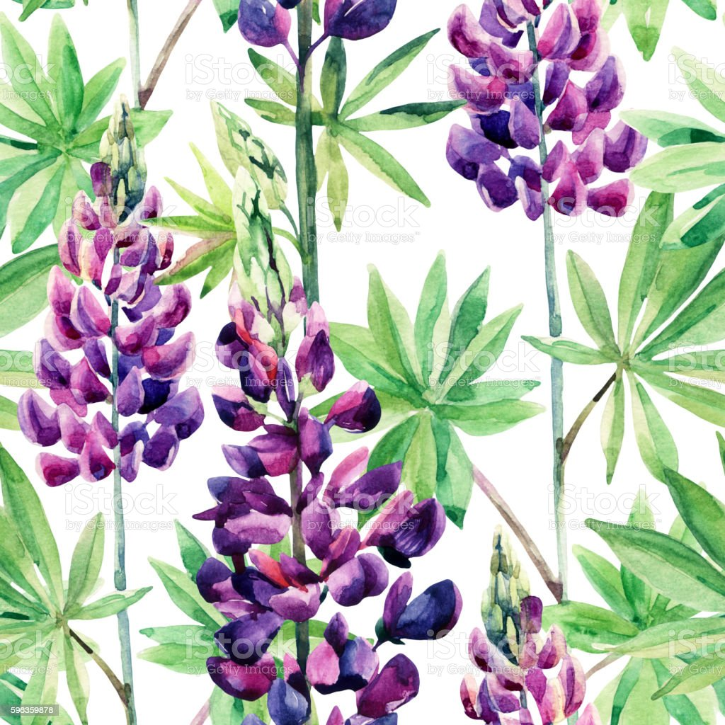 Flowers seamless pattern with watercolor lupines royalty-free flowers seamless pattern with watercolor lupines stock vector art & more images of backgrounds