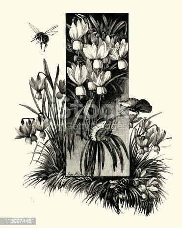 Vintage engraving of Flowers with butterflies and bee, Victorian 19th Century