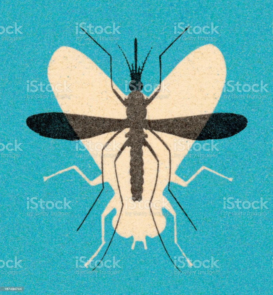 Fly and Mosquito royalty-free fly and mosquito stock vector art & more images of animal