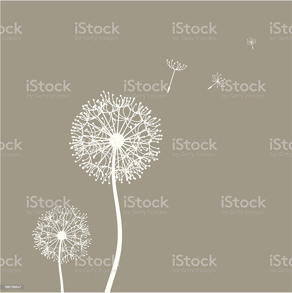 Flying dandelion seeds Flying dandelion seeds in the wind Back Lit stock vector