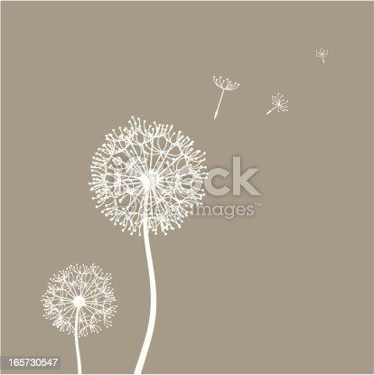 Flying dandelion seeds in the wind