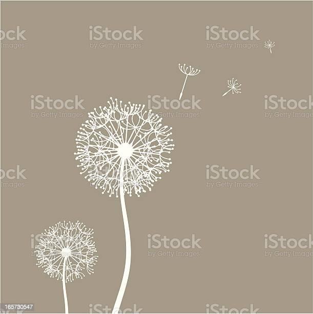 Flying dandelion seeds illustration id165730547?b=1&k=6&m=165730547&s=612x612&h=ltlpf03xjtgisk1oa3sadwi3uf9hhkhi46apethux4i=