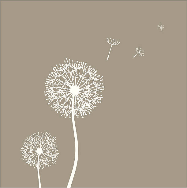 stockillustraties, clipart, cartoons en iconen met flying dandelion seeds - paardenbloem