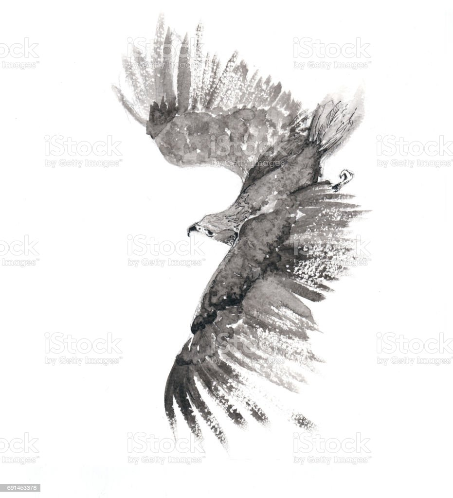 Flying Falcon vector art illustration