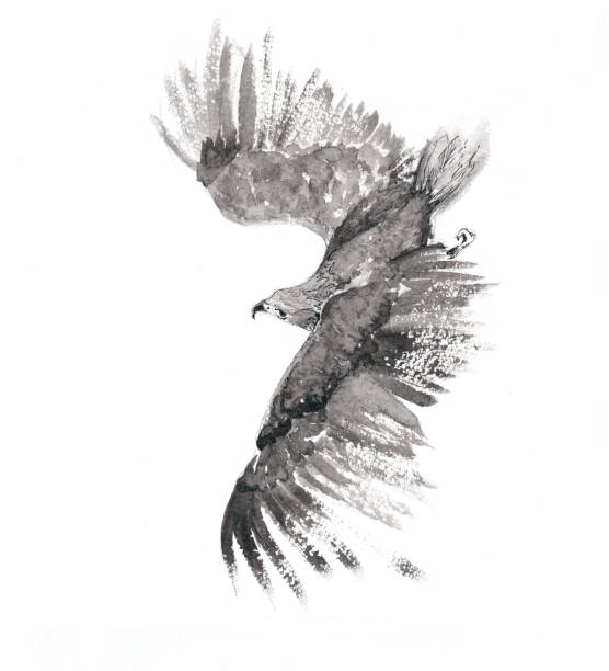 Flying Falcon vector art illustration