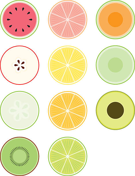 Food Cross-Sections vector art illustration