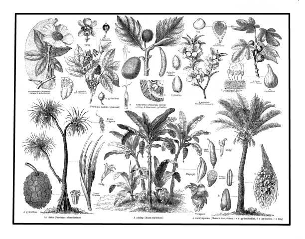 Plantas de alimentos - ilustración de arte vectorial