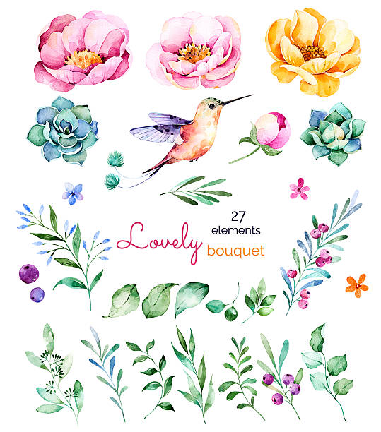 Foral collection with flowers,roses,leaves,branches,berries,succulents Foral collection with flowers,roses,leaves,branches,berries,succulents, hummingbird and more.Colorful floral collection with 27 watercolor elements.Set of floral elements.Lovely Bouquet collection bird clipart stock illustrations