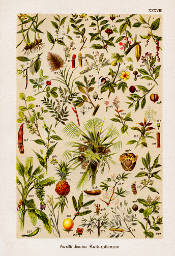 Foreign Cultivated Plant Chromolithography 1899