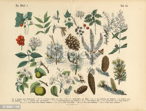 istock Forest and Fruit Trees and Plants, Victorian Botanical Illustration 516961158