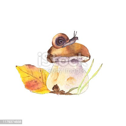 Watercolor mushroom with little brown snail, colorful leaf and green grass. Autumn forest. Isolated on white background - Illustration
