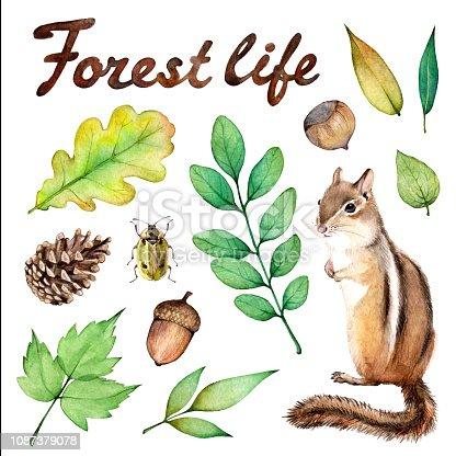 Forest life watercolor set. Illustration on white background with chipmunk, ladybug, hazelnut, mushroom, acorn and leaves.