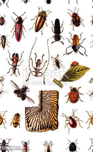 Illustration of a Forest pests,bugs,Seamless Pattern