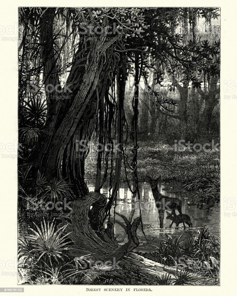 Forest scennery in Florida, 19th Century vector art illustration