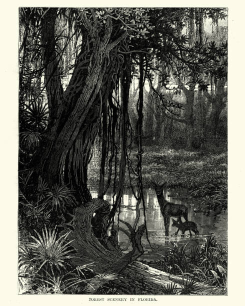 Forest scennery in Florida, 19th Century Vintage engraving of Forest scennery in Florida, 19th Century southern usa illustrations stock illustrations