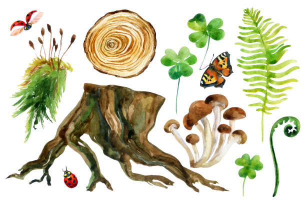 Forest set isolated on white background. Forest watercolor set isolated on white background. Woods stump, mushroom, leaves, moss, lady bug and butterfly. Watercolor colorful natural woods life. Hand painted forest wildlife illustration moss stock illustrations