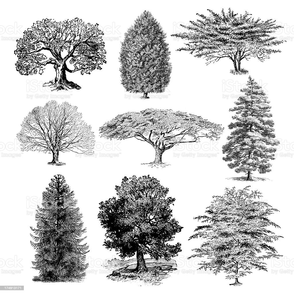 Forest tree illustrations vintage nature clipart stock vector art forest tree illustrations vintage nature clipart royalty free forest tree illustrations vintage nature clipart thecheapjerseys Gallery