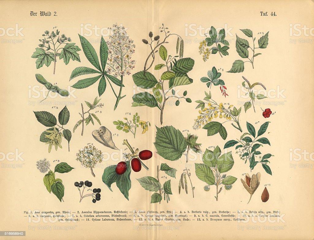 Forest Trees and Plants, Victorian Botanical Illustration vector art illustration