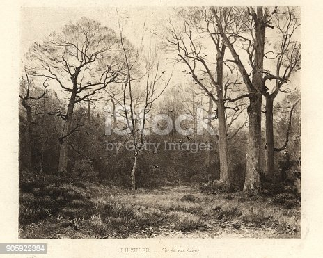 istock Foret en hiver, Forest in Winter 905922384