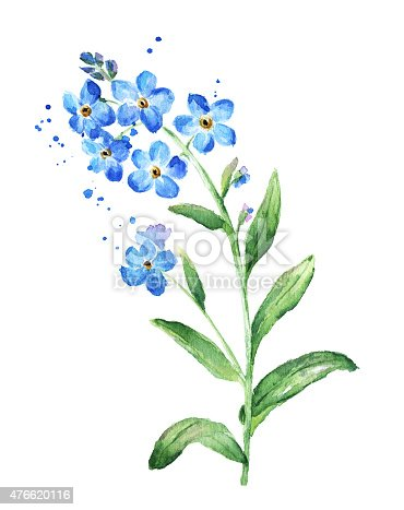 forget me not flower watercolor stock vector art   more free dragonfly clipart free dragonfly clip art shape