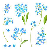 istock Forget me not flowers watercolor set 1175032259