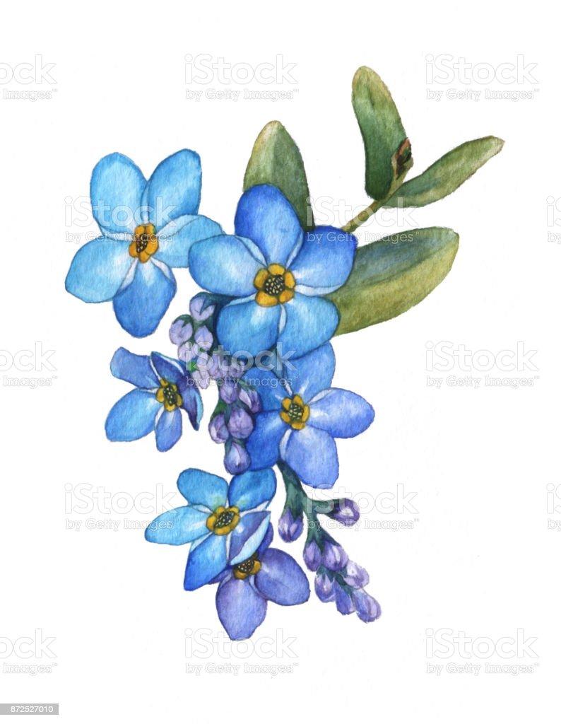 Ramo De Flores De Nomeolvides Azul Flor Silvestre Acuarela Dibujado ...