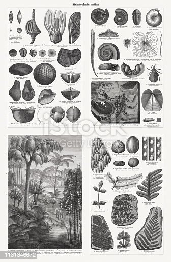 istock Fossils and plants from the Carboniferous period, woodcuts, published 1897 1131346672