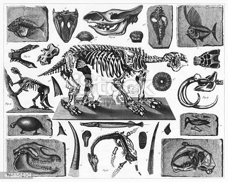 Engraved Illustrations of Fossils and Skeletons from Iconographic Encyclopedia of Science, Literature and Art, Published in 1851. Copyright has expired on this artwork. Digitally restored.