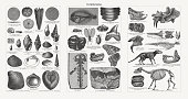 Collection of dinosaur skeletons and fossils, a set of plants, animals and paleontology elements isolated on white. Vector illustration for creating patterns, prints, web, postcards, t-shirts