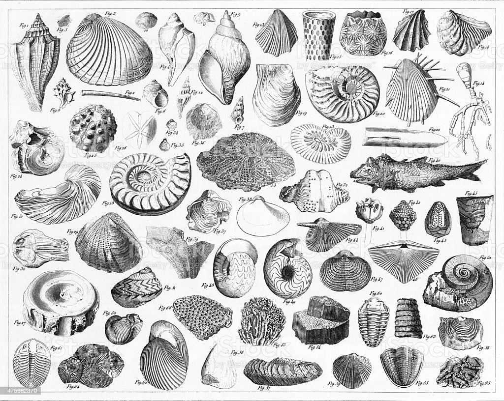 Fossils From Various Periods Engraving vector art illustration