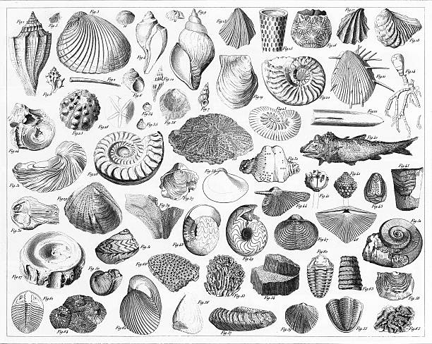 fossils from various periods engraving - fish skeleton stock illustrations, clip art, cartoons, & icons
