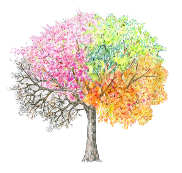 four seasons.  tree handdrawing isolated on white. - cztery pory roku stock illustrations