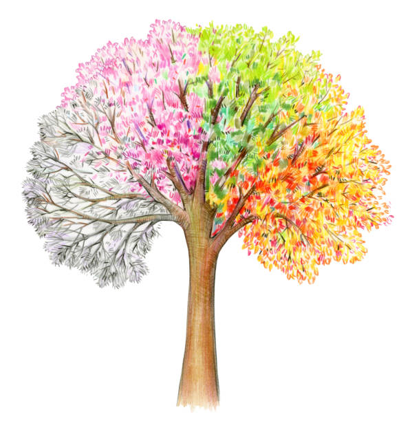 four seasons.  tree handdrawing isolated on white. - four seasons stock illustrations