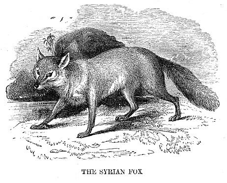 Fox engraving 1869