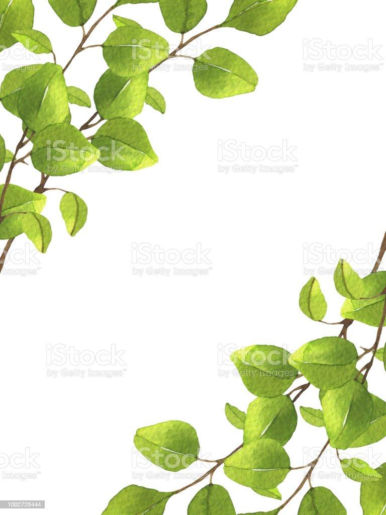 ユーカリとフレームの枠線植物イラスト イラストレーションのベクター