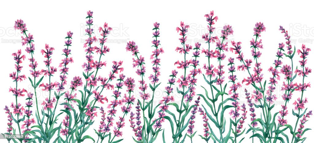 Frame border with the lavender flowers. Hand drawn watercolor illustration on white background. vector art illustration
